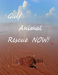 Gulf Animal Rescue NOW!!!